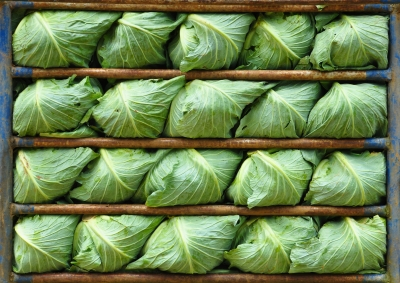 Cabbage by Baitong333 on FreeDigitalImages